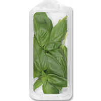 Organic Fresh Basil .5oz
