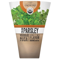 Organic Parsley Live Plant, 1 ea